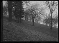 Grassy hill with trees, New York City (?), undated (ca. 1913-1914).