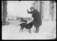 Unidentified man playing with pair of dogs on a city sidewalk, New York City, undated (ca. 1913-1914).