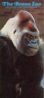 General information brochure for the Bronx Zoo, Gorilla front cover, circa 1980-1989