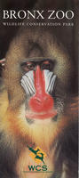 General information leaflet for the Bronx Zoo, Mandrill Baboon front cover, circa 1990-1999
