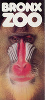General information brochure for the Bronx Zoo, Mandrill Baboon front cover, circa 1980-1989