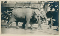 Elephants on Parade on Main Street