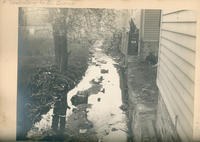 A tributary to the Bronx River running behind houses